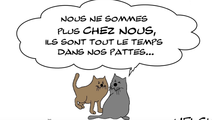 chats et confinement